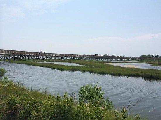 Assateague State Park Camping: Marsh walk