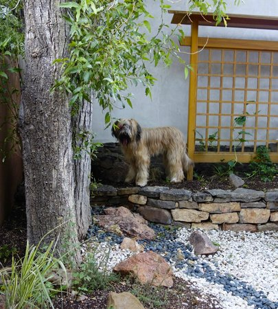 Ten Thousand Waves : Dog friendly - looking for lizards in our private courtyard
