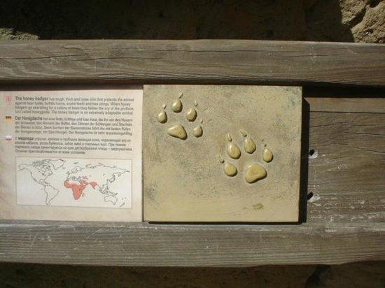 Prager Zoo: señal etica para no videntes
