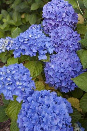 Kubota Garden: Flowers