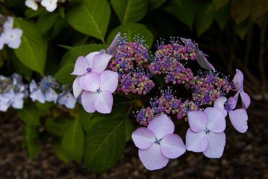 Kubota Garden: Pink Flowers