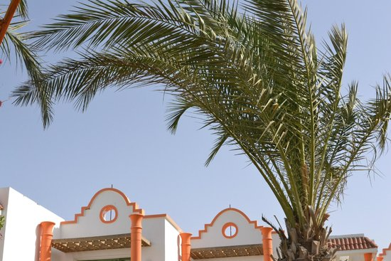 Fantazia Resort: palme