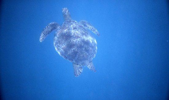 Fantazia Resort: tartaruga