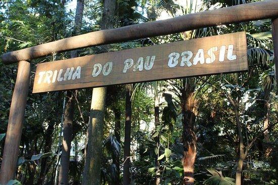 Parque do Pau Brasil é dica para ecoturismo