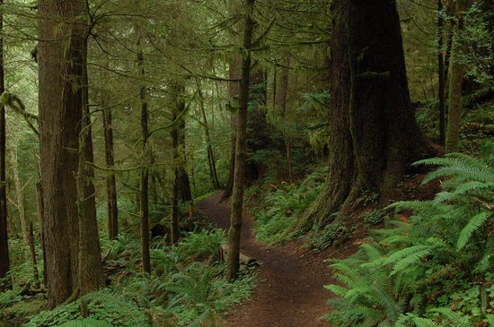 Ecola State Park: Clatsop Trail, part of Oregon Coastal Trail system