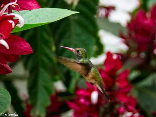 Hosteria Itapoa: beautiful garden at Itapoa