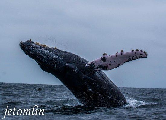 Hosteria Itapoa: humpback whale