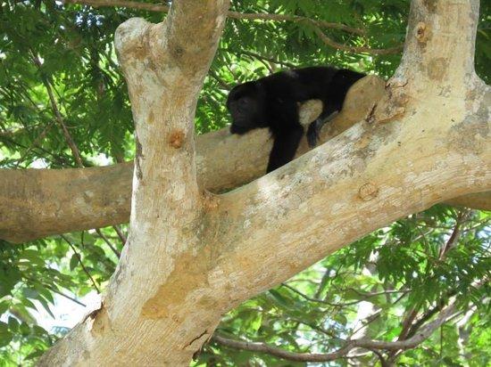 Palo Verde Boat Tours: Loved the monkeys!