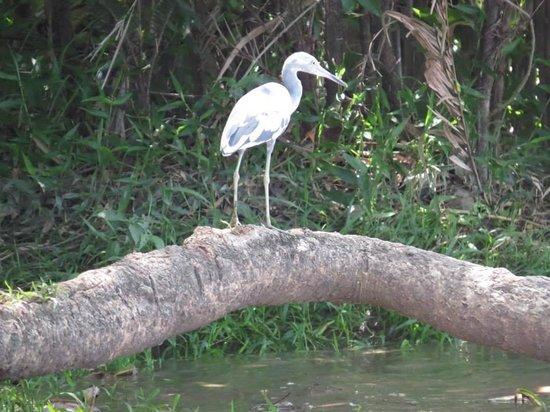 Palo Verde Boat Tours: Many types of birds