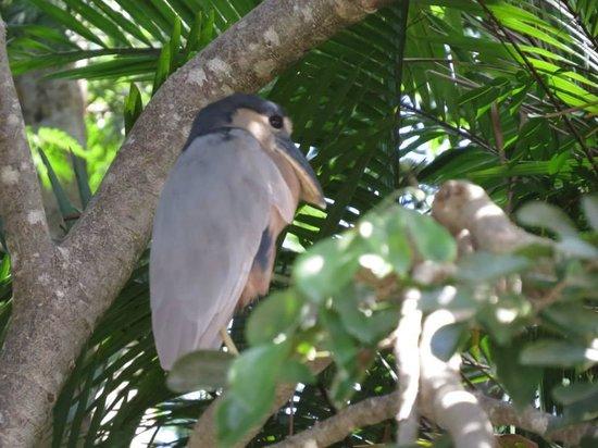 Palo Verde Boat Tours: Many birds