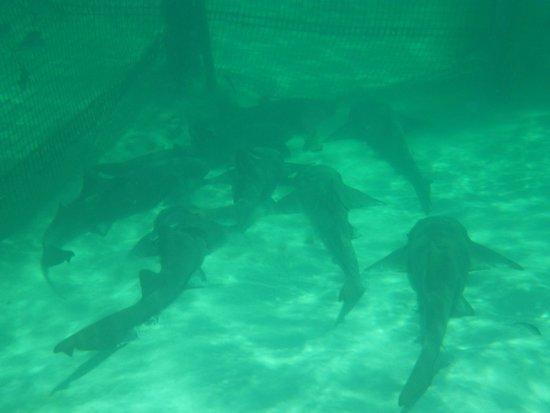 Marinarium Excursions - Reef Explorer : 14
