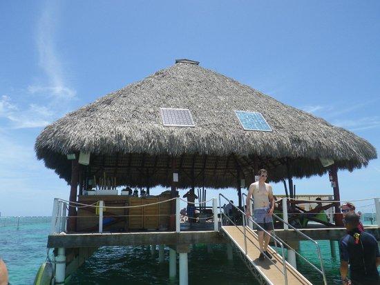 Marinarium Excursions - Reef Explorer : 6