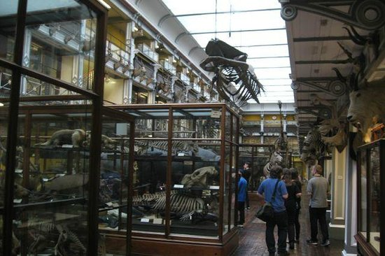 National Museum of Ireland - Natural History : 2nd floor exhibits