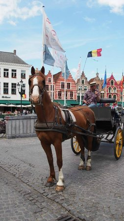 Horse Drawn Carriage Tours : Happy well treated horses.