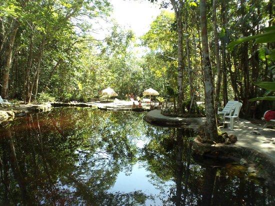 Piscina natural 01 picture of amazon ecopark jungle for Amazon piscinas