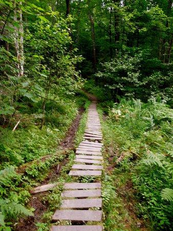 Stoweflake Mountain Resort & Spa: nearby hike