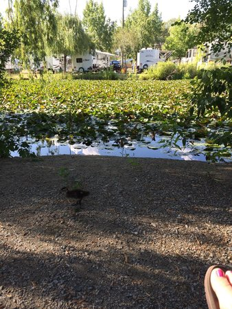 Oxbow RV Resort: Next to lake with cute visitors