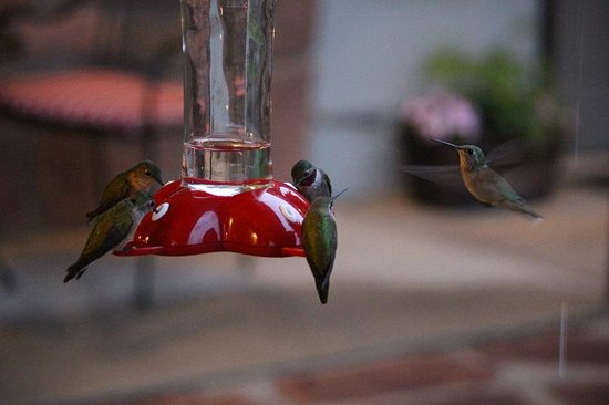 The Maxwell Inn: Don't forget the hummingbirds