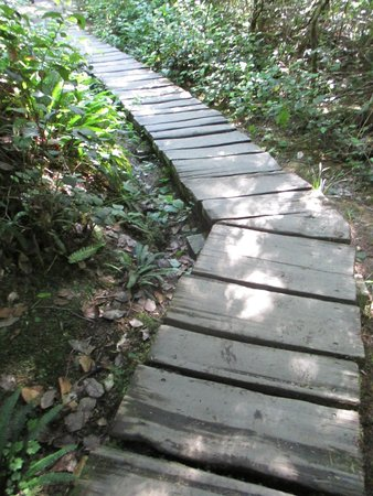 Cape Flattery Trail: Part of the trail to the tip of the Cape. Not even, a few loose boards & narrow.
