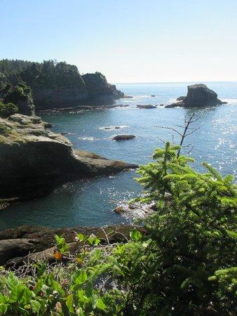Cape Flattery Trail: Interesting, no sealions