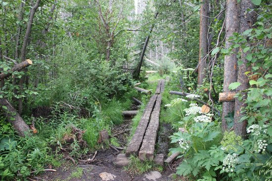 Lily Pad Lake: One of the bridges on the Lily Pad Trail.