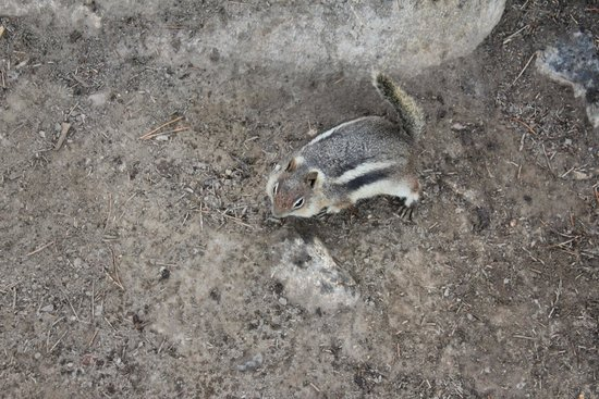 Lily Pad Lake: Chipmunk hanging with us during snack time!