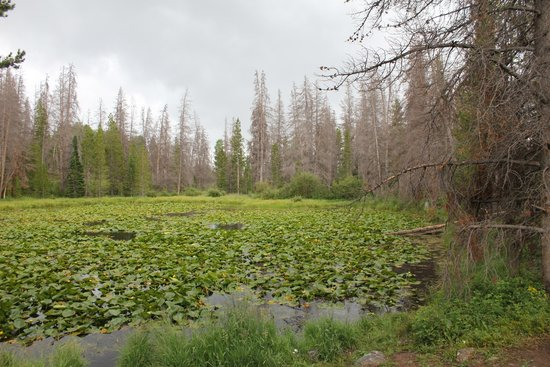 Lily Pad Lake: The other lake covered in lily pads.