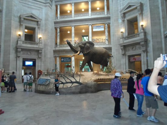 National Museum of Natural History : Entrada