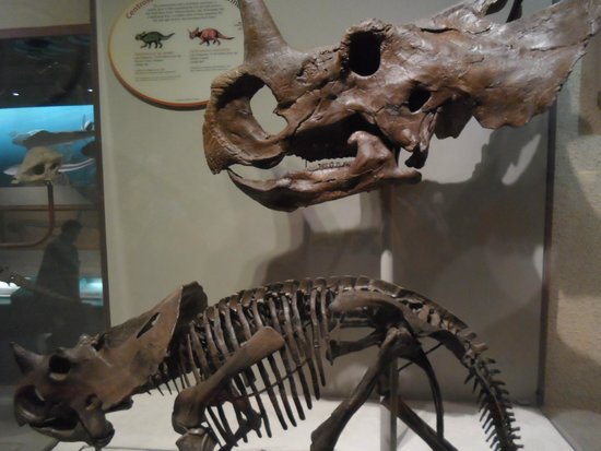 National Museum of Natural History: Evolução