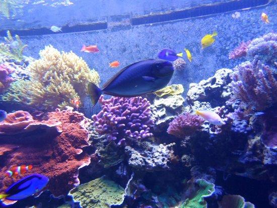 National Museum of Natural History: Aquario lindo e maravilhoso