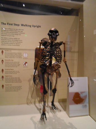 National Museum of Natural History: Interessante