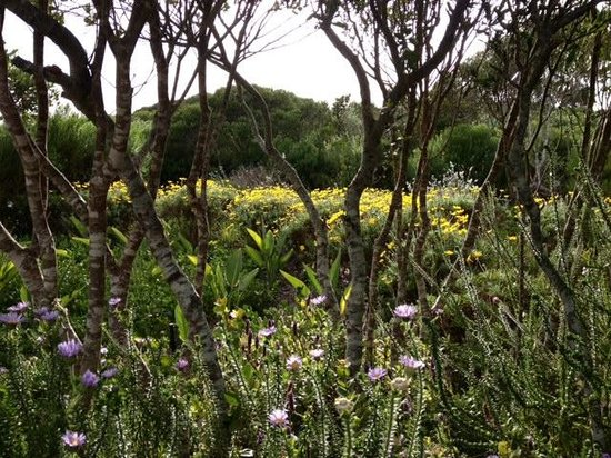 Grootbos Private Nature Reserve: Fynbos