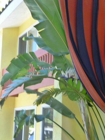 Wild Palms Hotel - a Joie de Vivre Hotel : Soft Decor Touches