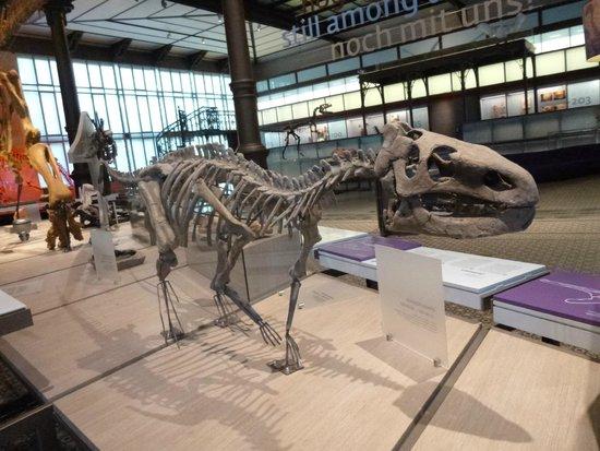Museo de Ciencias Naturales: Exposição