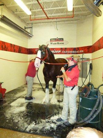Warm Springs Ranch: Bath time