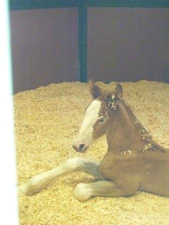 Warm Springs Ranch: A newborn Clyde