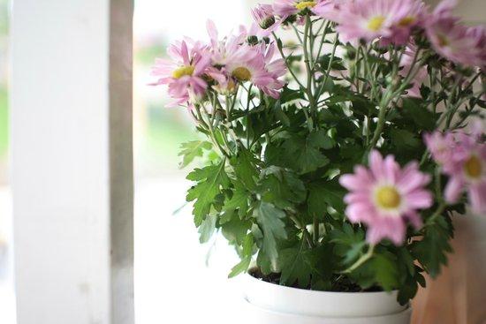 Windmills Cafe: the flower vase