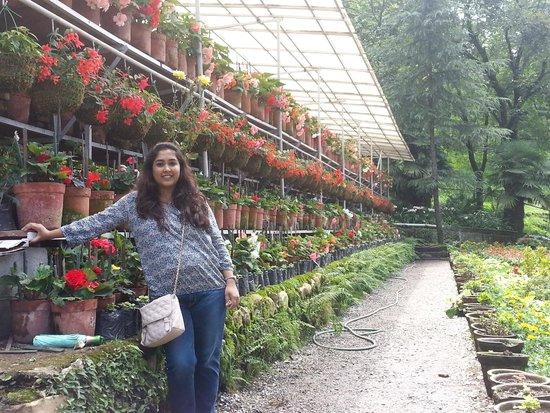 Company Garden : nursery in the garden