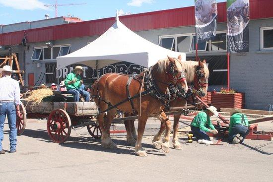 Calgary Stampede: Horse Drawn Wagon
