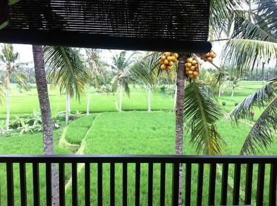 Green Field Hotel and Bungalows : View from our room