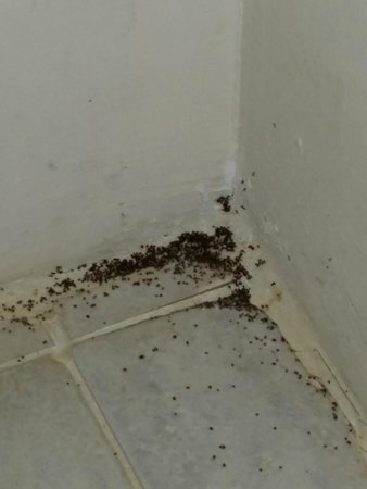 Panorama Bungalows Aqua Park Hurghada: Ants that where coming out of everywhere in the rooms