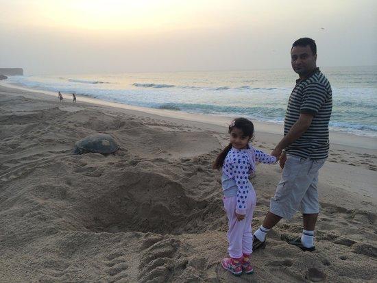 Ras al-Jinz Turtle Reserve : Watching turtles