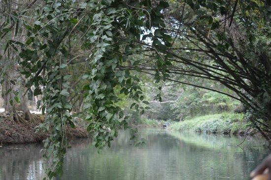 Martha Brae River: beautiful