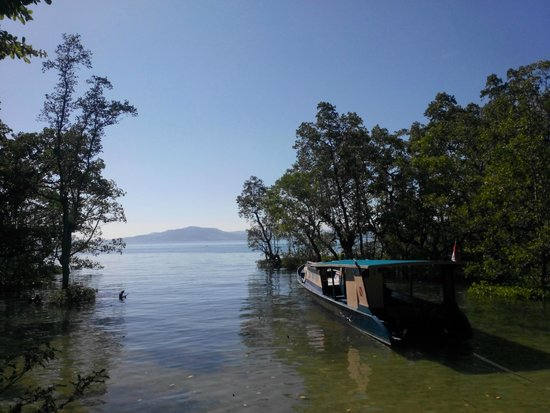 Bunaken SeaGarden Resort: view (high tide) from resort lawn - walk or swim past mangroves to reef