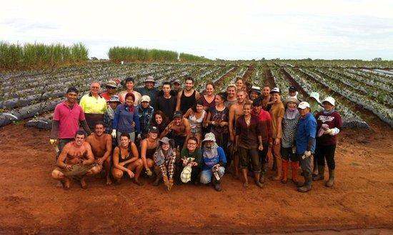 Bundaberg CBD: The farming work in Bundaberg