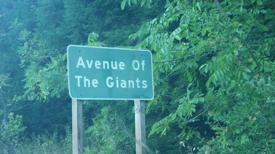 Riverwood Inn: Avenue of the Giants
