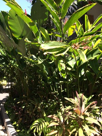 Risata Bali Resort & Spa : Gardens