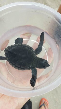 Turtle Conservation and Education Centre : Small turtle that I adopt