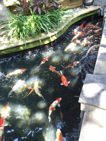 Risata Bali Resort & Spa : Pond