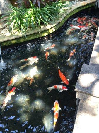 Risata Bali Resort & Spa : Pond near Lobby
